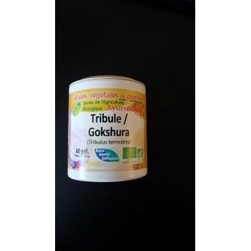 Tribulus bio gel 375mg / gel Boite de 60 gel