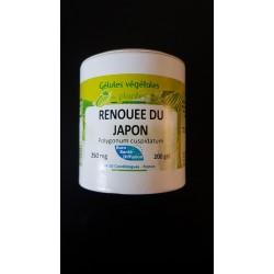 renouée du japon ( racine)  gel 250mg / gel Boite de 200 gel